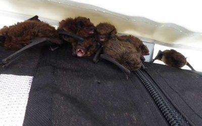 Sussex Bat Hospital